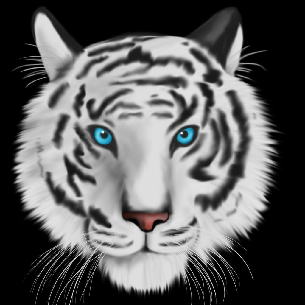 White Tiger Blue Eyes Drawing   www.pixshark.com - Images ...