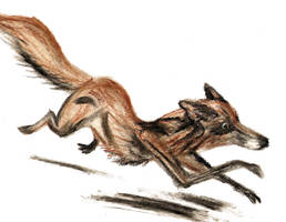 Red Fox by DungeonWarden