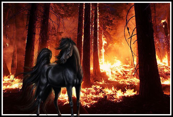 Beyond The Blaze - Shh Equine by Kitty876