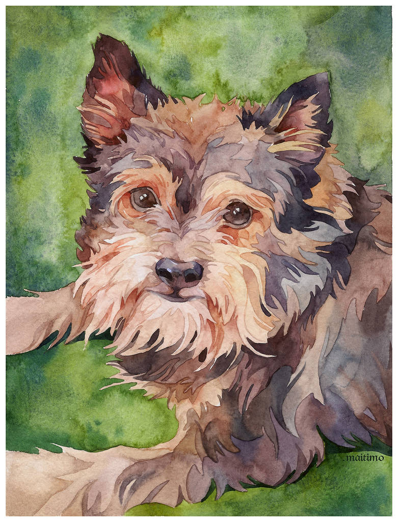 Fima's portrait
