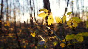 Leaves of Life by Nicapol