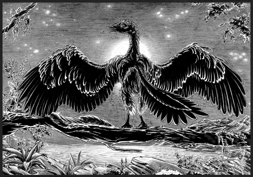 Archaeopteryx-lithographica-A by aspidel
