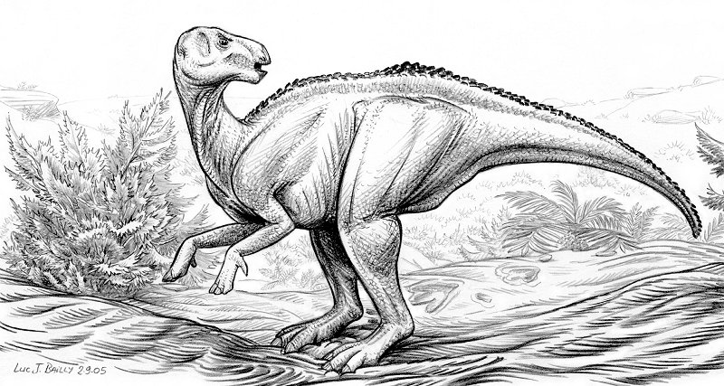 Bactrosaurus-johnsoni-A