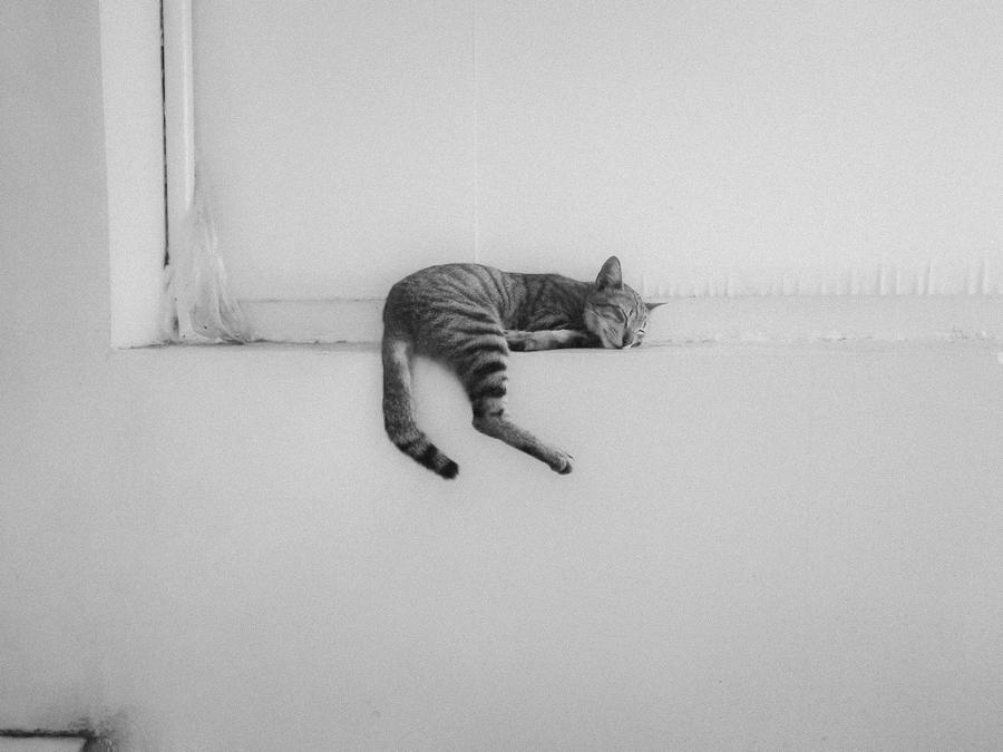 Sleepy Cat by Fadhun