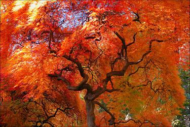 Color Explosion by IngoSchobert