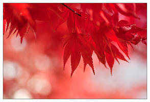 When The Leaves Are Burning by IngoSchobert