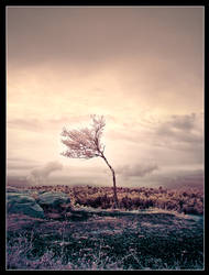 Alone On The Hill by IngoSchobert