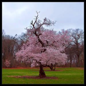 Oh Spring, I Love Thou by IngoSchobert