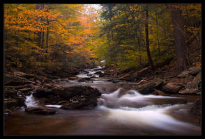 A Fall Symphony