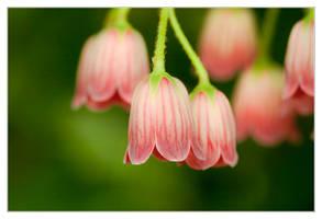 Spring Bells Ringing Tenderly by IngoSchobert