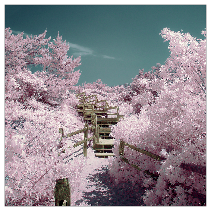 The Path Through Cotton Candy Land by IngoSchobert