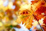 Autumn Focus by pixlmania