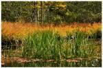 Blades Of Grass by EsBest