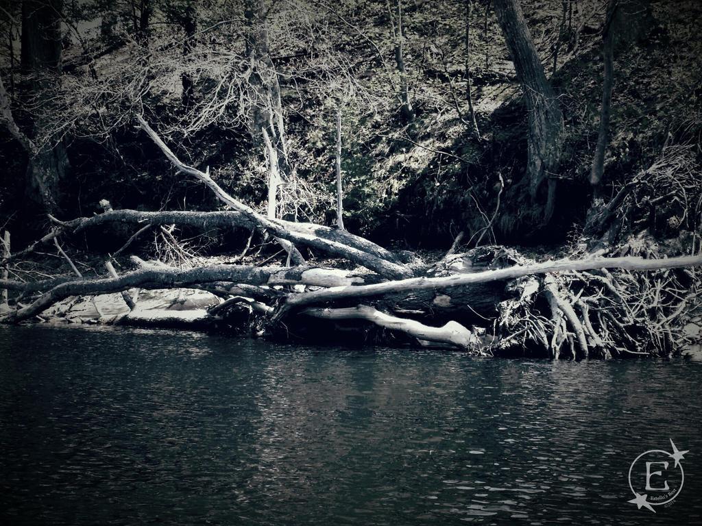 Vintage Deadwood by EsBest