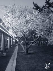 Tree Blossom by EsBest