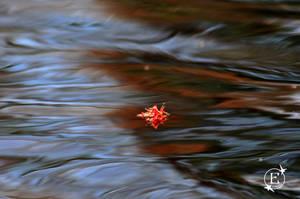 Bloom Down Sream by EsBest