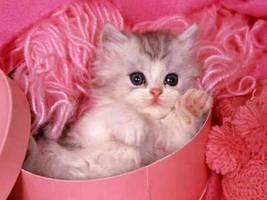 Kitty by HKclub