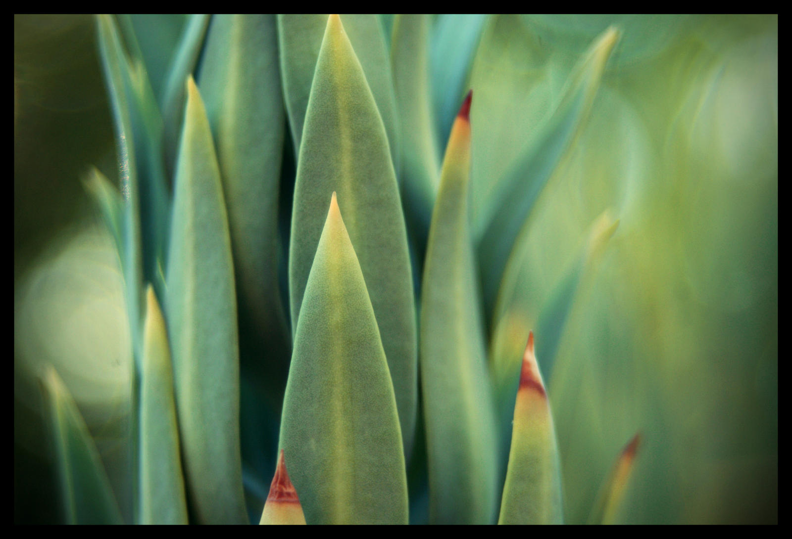 Cactus_08 by fuamnach
