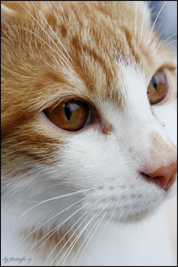 + Kamui Cat + by LilyMilkshake