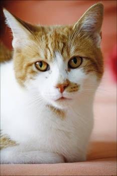 Kamui - Portrait