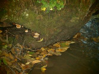 Mushroom river by Vinterperle