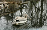 Birds Reflection