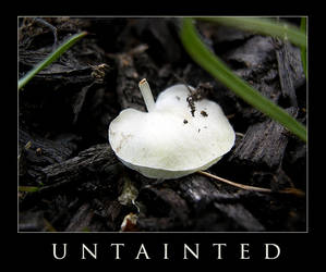 Untainted by vivacious