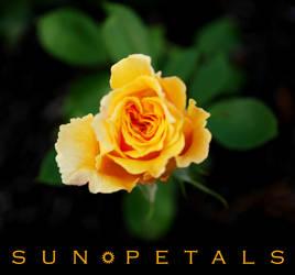 Sun Petals by vivacious