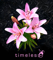 Timeless by vivacious