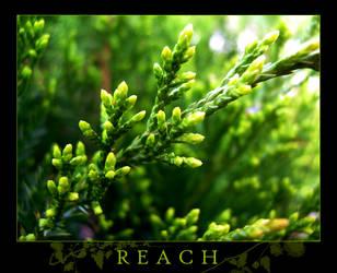 R E A C H by vivacious