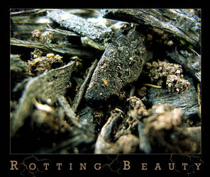 Rotting Beauty by vivacious