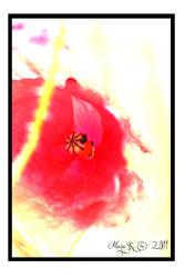 Flower By Maya K. by padwane