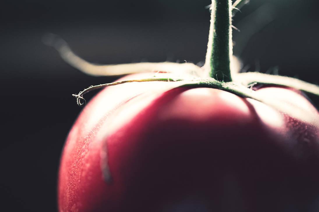 A Tomato a Day...