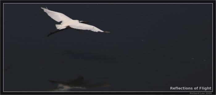 Reflections of Flight