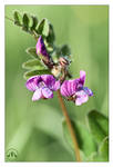 CLIVE AYRON ~ Floral Antics
