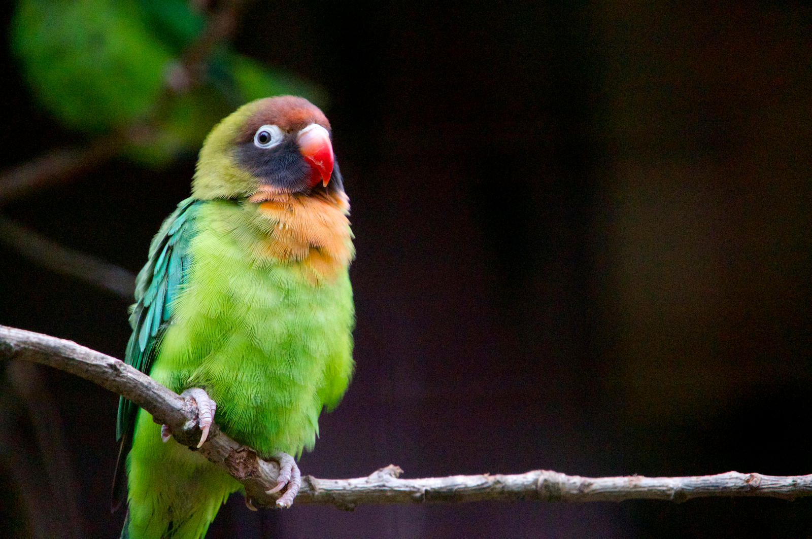 Parrot by WeeGit
