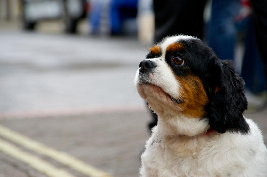 Street dog by WeeGit