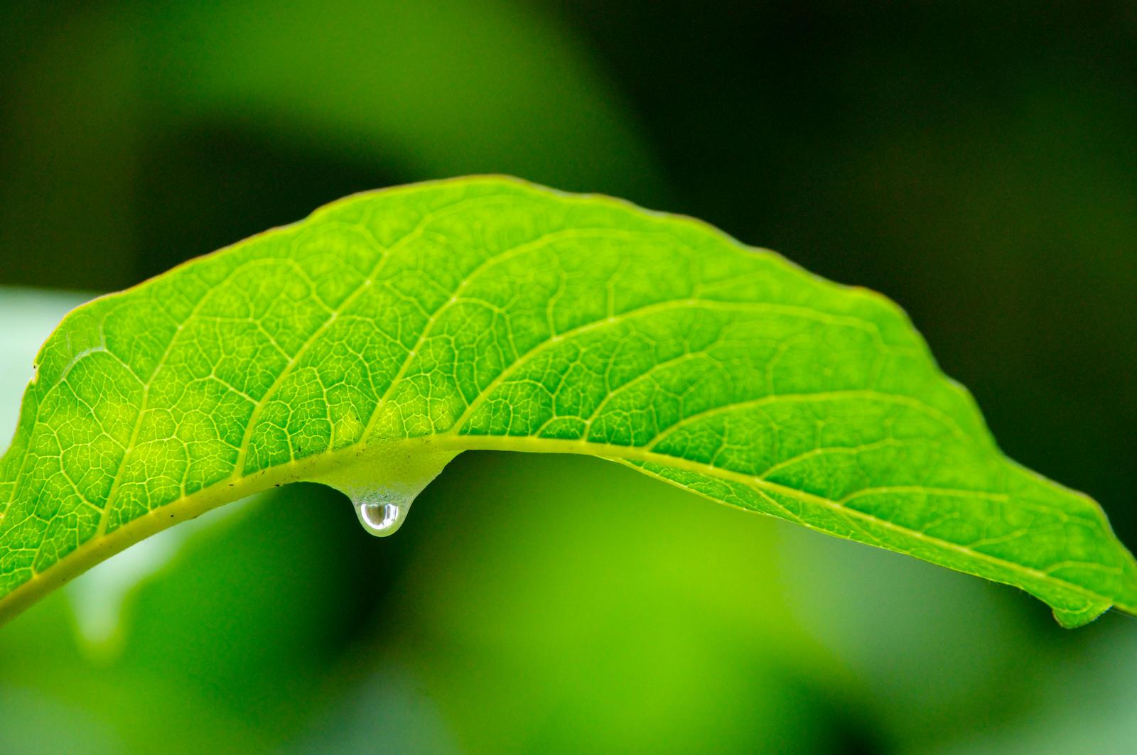 Droplet by WeeGit