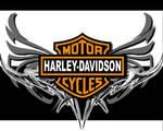 Harley ..