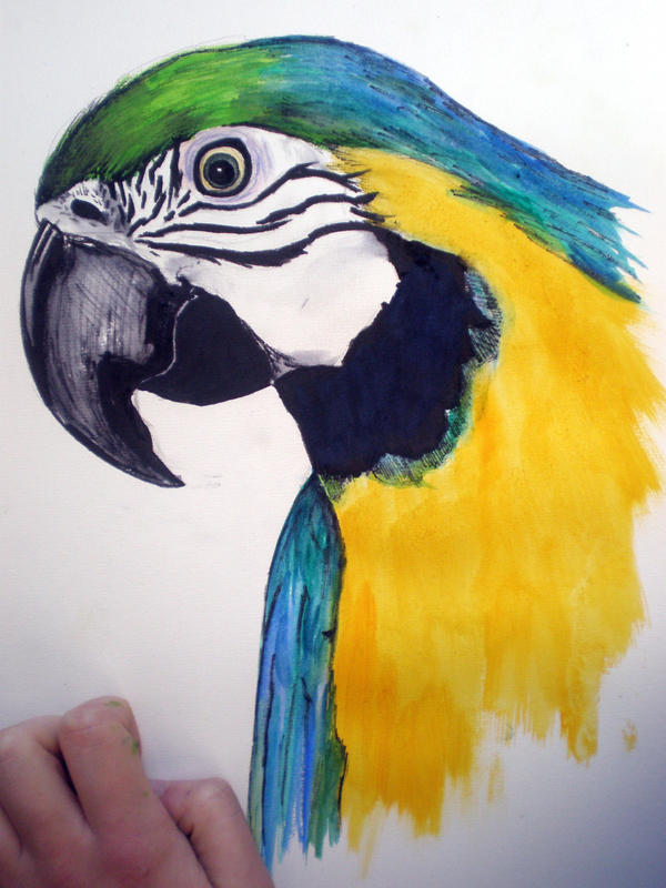 Parrot by katiedraws