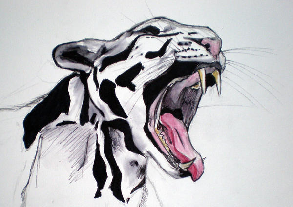Clouded Leopard by katiedraws