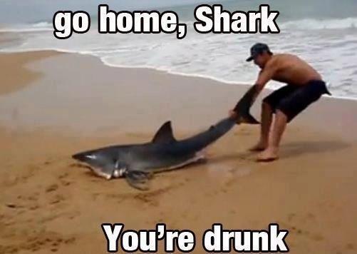 Stupid shark by Darkheartgoldsoul
