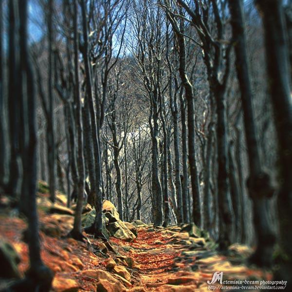 the path II by Artemisia-dream