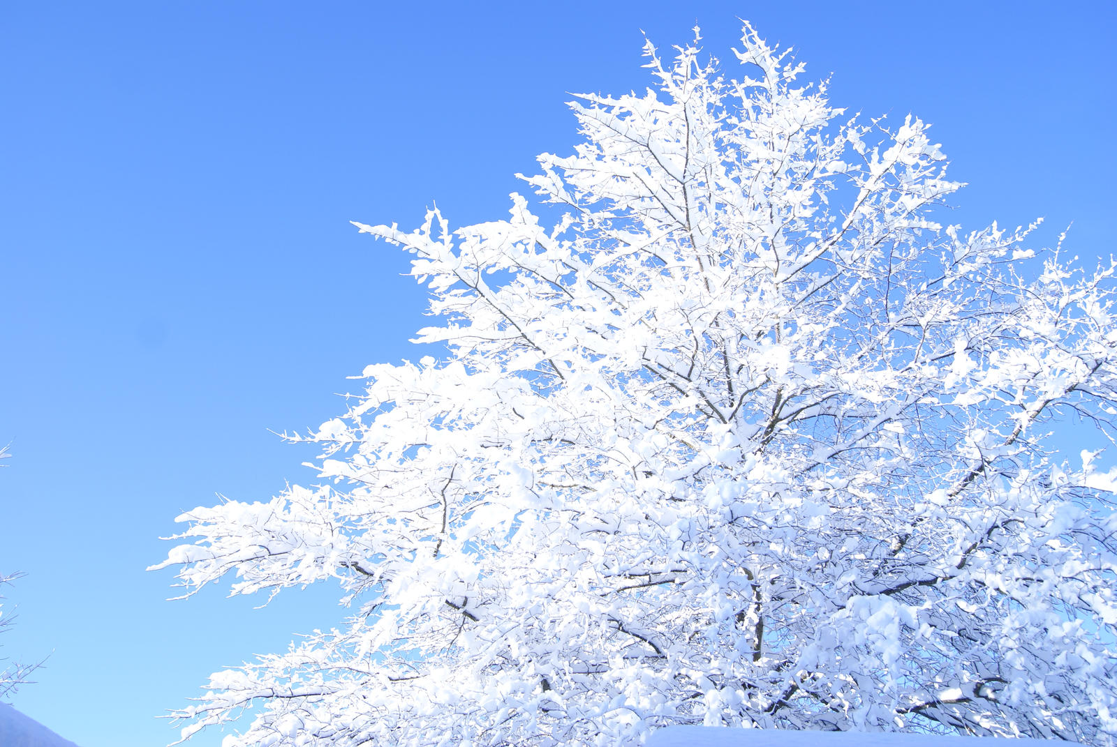 Snow Tree 3 By Livingangels On Deviantart Tree And Sno