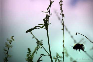 bumblebee by AndrewMackenzi