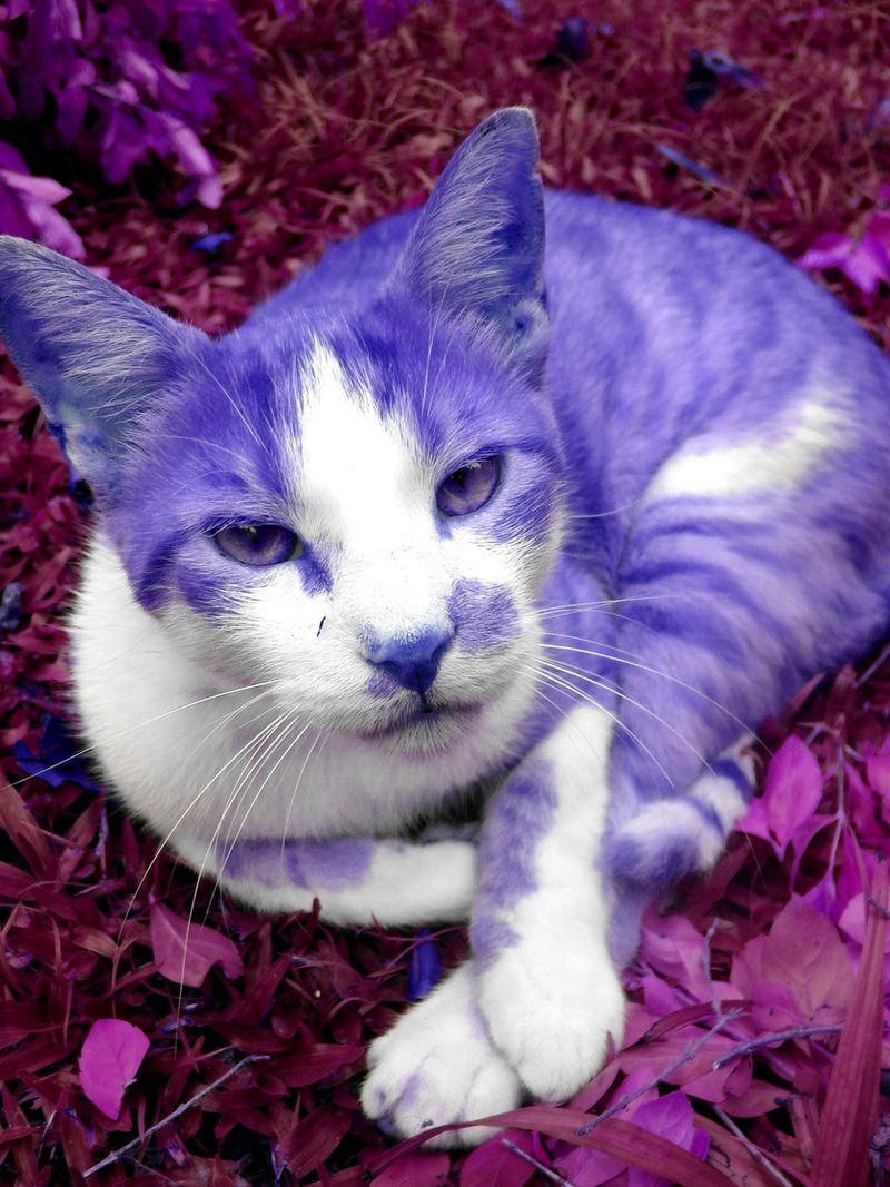 Cat Purple by dieetriich