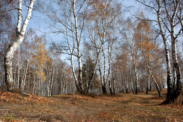 stock_autumn_forest_71 by Qosko-stock