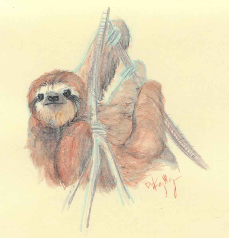 Sloth Water Color