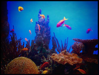Reef Life by eclecticmuses