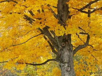 Orange Tree by stefee-818
